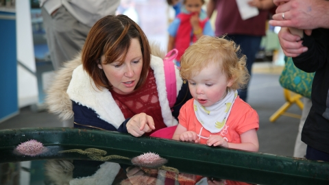 Festival of the Sea, a mother and her young girl are wowed by the marine tanks